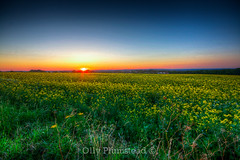 Summer Sunset (Olly Plumstead) Tags: city flowers blue light sunset summer orange sun field yellow canon landscape long glow view wide rape vista olly distance processed hdr rapeseed oilseed plumstead photomatix 450d ollyplumsteadportfolio