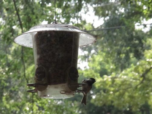 Birds 0325