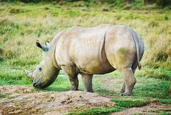 "PhotoFly Travel Club Kenya Safari 2011! • <a style=""font-size:0.8em;"" href=""http://www.flickr.com/photos/56154910@N05/5892415711/"" target=""_blank"">View on Flickr</a>"