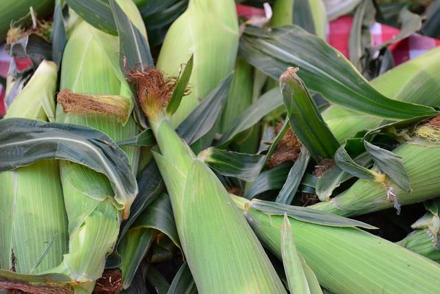 SOJ Corn