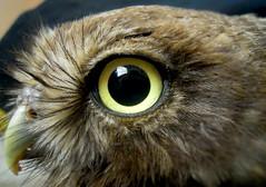 Profilo del rapace (LauDot) Tags: blinkagain bestofblinkwinners blinkagainsuperstars blinksuperstar