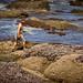 Shi Shi Beach Backpacking Trip - July 2011