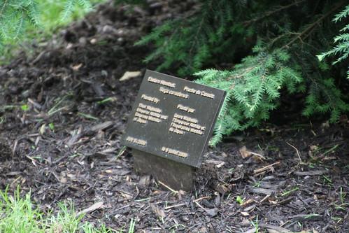 カナダツガ 天皇陛下植樹