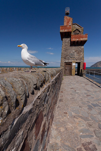 505/1000 - Lynmouth Seagull by Mark Carline