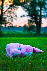 Pink Bunny Sunset (JasonManion) Tags: sunset bunny nature animal canon rebel stuffed outdoor t3i jasonmanion canonrebelt3i