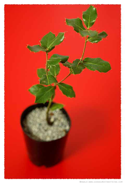 black truffle tree© by Haalo