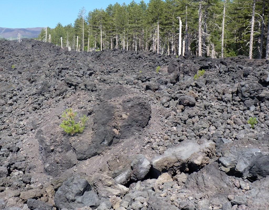 Etna Piano Provenzana - Life on the lava stones (La vita rinasce sulla lava)