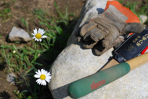tools and daisies