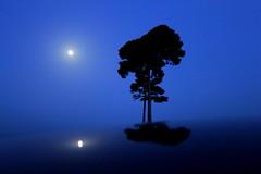 Full moon (da.geli) Tags: trees italy moon reflection umbria doublyniceshot tripleniceshot mygearandme mygearandmepremium mygearandmebronze artistoftheyearlevel3 artistoftheyearlevel4 4timesasnice impecableimagen