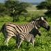 Etosha National Reserve - Namibia