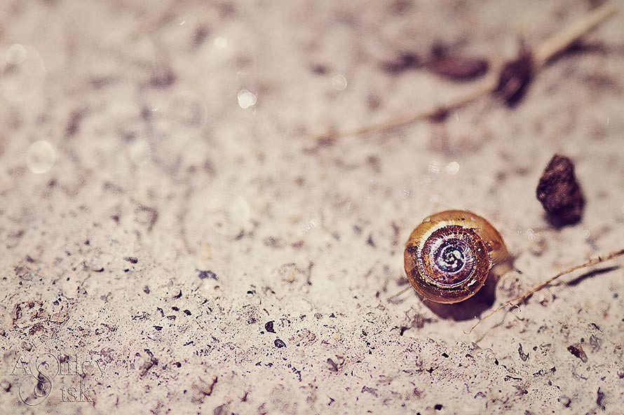 Snail Shell RS