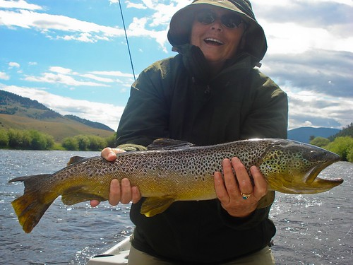 Pictures Of The Day Huge Big Hole River Brown Trout Ii Orvis News