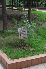 Don't Hurt Trees -- It's the Law! (treasuresthouhast) Tags: china tree sign law