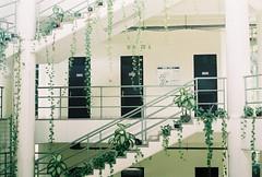 interior (yttria.ariwahjoedi) Tags: tree green film architecture analog canon campus indonesia landscape leaf ae1 interior institut pertanian bogor daun ipb lanskap