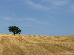J' Aime (Domi Rolland ) Tags: france nature canon ciel été arbre champ aveyron 2011 midipyrénées g9