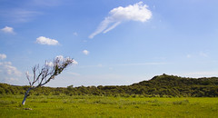 Zuid-Kennemerland National Park, Netherlands