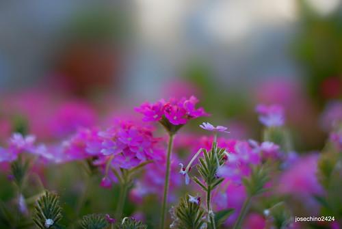 Colores en una mañana de verano
