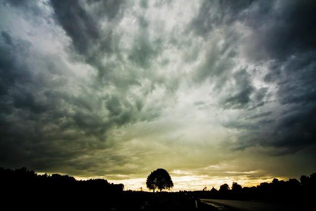 tree 'n' evening sky