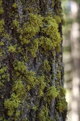 Sequoia National Park (stevenbley) Tags: california park ca trees vacation sequoia sequoianationalpark