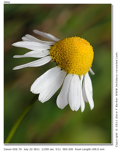 Daisy Botany Bay Chorley Lancashire