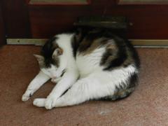 Oimo on his favourite nap spot