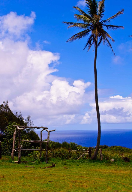 Hayrack and Palm Tree