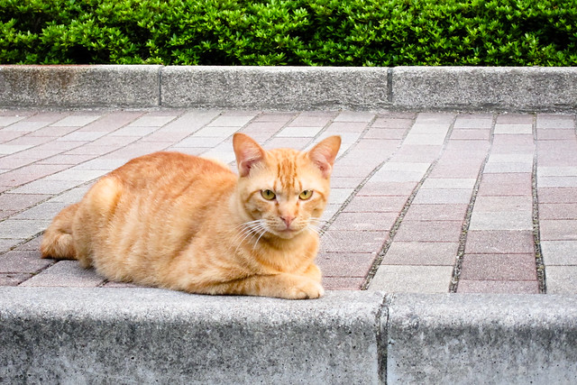Today's Cat@2011-07-26