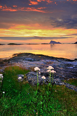 flowers with seaview (John A.Hemmingsen) Tags: sunset sky sun seascape nature clouds norge nikon nordnorge troms sommary allxpressus sky nikkor1685dx touraroundtheworld nikond5000