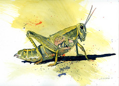 grasshopper (Don Gore (dgdraws)) Tags: watercolor painting insect kansas grasshopper flinthills