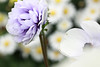 really rather funny, quite peculiar, almost strange. (The.StoryKeeper) Tags: macro anenome pps perfectpurplesaturday