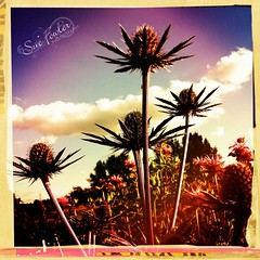 Mad About Flowers (suefowlerphotography) Tags: flowers texture floral whimsy textures florals iphone