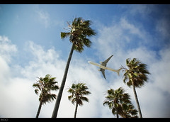Why Leave? (elvolo) Tags: county trees sky beach clouds plane airplane los airport angeles flight jet palm international airline lax airliner dockweiler washingtonia