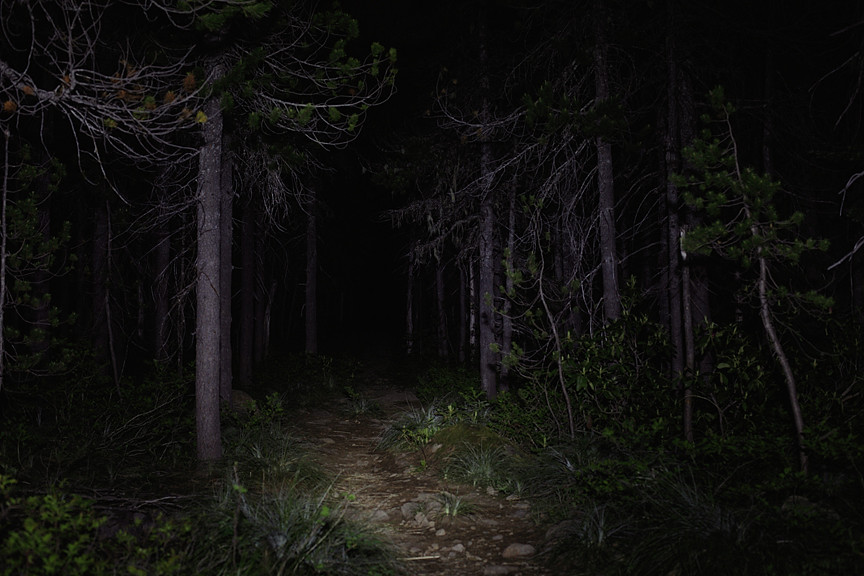 Dark woods and active imaginations