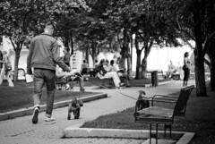 Calgary Street (Pojo Foto) Tags: street urban dog pet pets white eastvillage black calgary bike skyline river blackwhite highway cityscape accident outdoor uptown alberta 17 rollerblade riverwalk citytv 17ave
