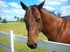 Vida Ecuestre (Cristina Bruseghini de Di Maggio) Tags: horse caballo nikon cristina honduras campo ecuestre hipico zamorano natureselegantshots