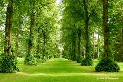 Lime Avenue (Bob.W) Tags: trees national westonbirt lime aeboretum mygearandme mygearandmepremium mygearandmebronze mygearandmesilver mygearandmegold mygearandmeplatinum mygearandmediamond