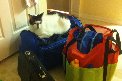 Cat wants to come too!