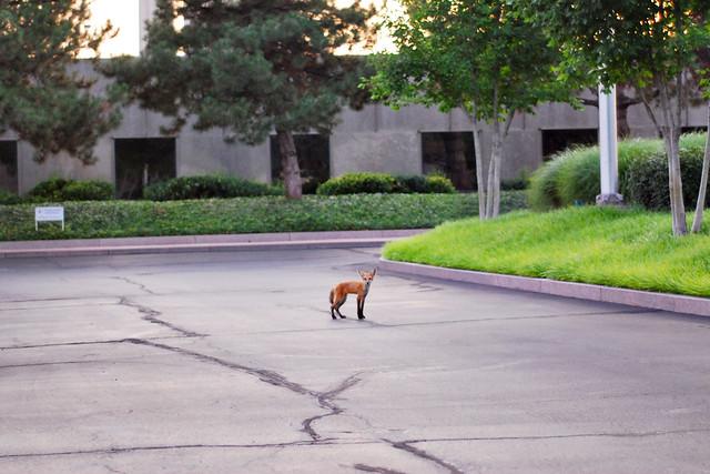 work fox