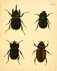 smithsonian libraries beetles arthropoda sil institution pictorialworks bhl:page=12733161 dc:identifier=httpbiodiversitylibraryorgpage12733161 bhlarthropod