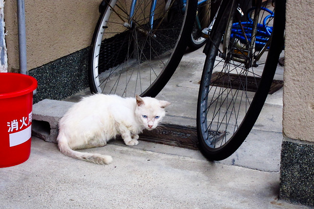 Today's Cat@2011-08-05