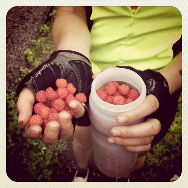 Picking raspberries along the rail trail. Day 1.
