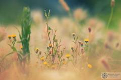 Nature (abduleelah.s.klefah) Tags: canon eos mark ii 5d