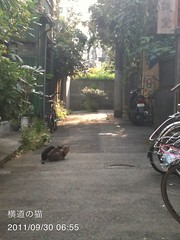 朝散歩(2011/9/30 6:50-7:10): ネコいた!