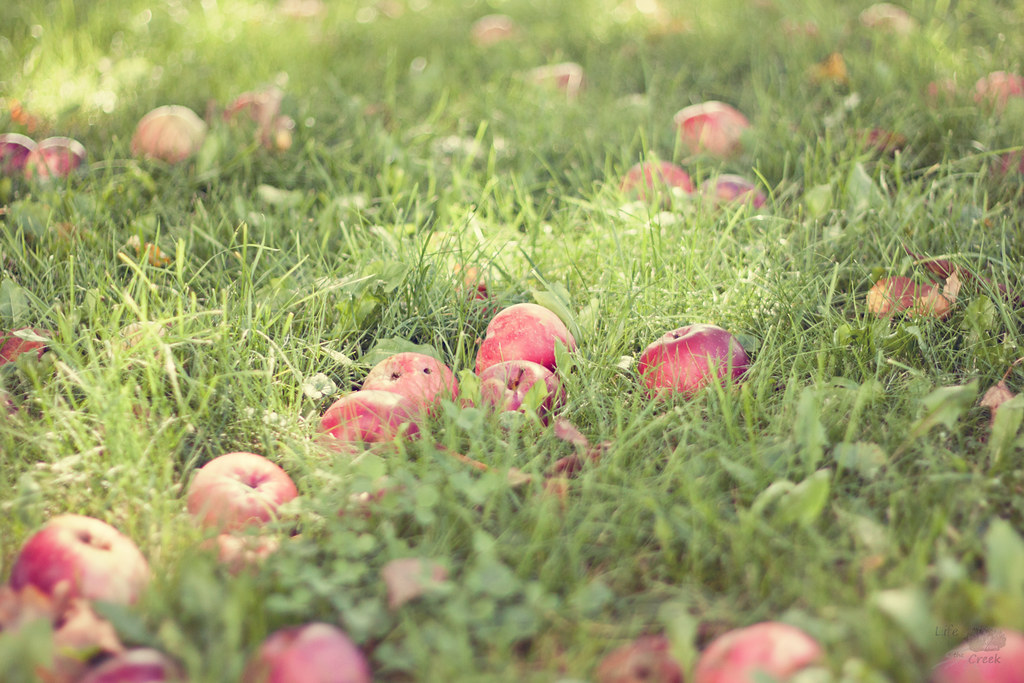 Apples-edit