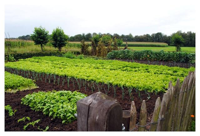 Jansens veggie patch