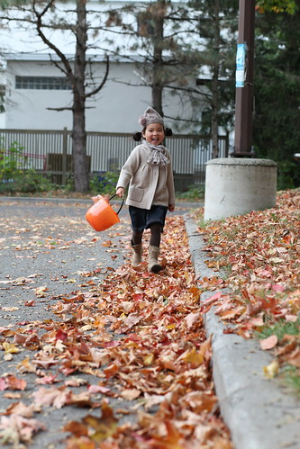 collecting leaves for school