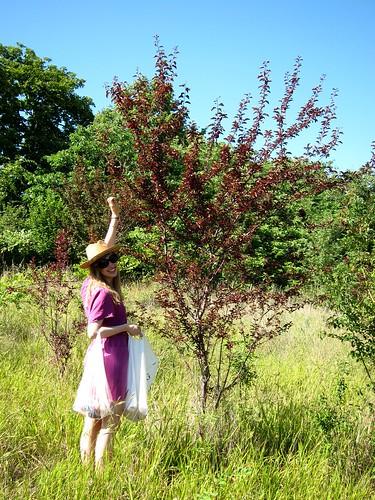 Picking Plums by Danalynn C