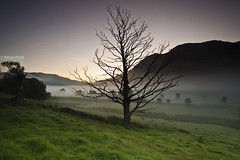 The Dead Tree (.Brian Kerr Photography.) Tags: light shadow mist tree sunrise canon landscape nationalpark darkness lakedistrict valley cumbria views blencathra stjohnsinthevale eos5dmkii