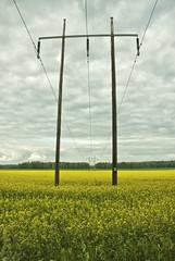Campos de rapsolja (Clio A Couso) Tags: sweden campo suecia rapsolja