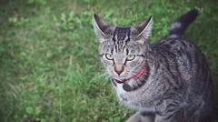 Being (OlaHeland) Tags: grass animal cat poland polska koty kot ola antosia tosia wie heland